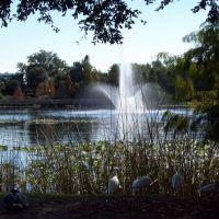 Lake Lily, Итонвилл