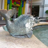Fountain Fish at The Falls, Miami Dade County., Кендалл