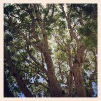 Southern Oak Enjoying The Sun., Кендалл