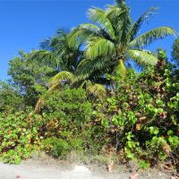Miami: Bill Baggs Cape Florida State Park (Key Biscayne), Ки-Бискейн