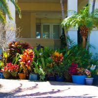Flowers, Key Biscayne ..., Ки-Бискейн