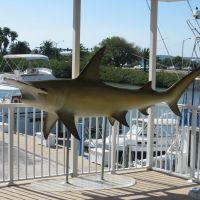 Clearwater Marine Aquarium, Клирватер