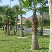 Windward Psge., Clearwater, Клирватер