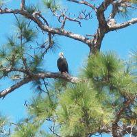 Bald Eagle, Лак Магдален
