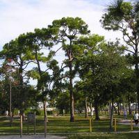 Pine Trees, Oakland Park Florida, Лейзи-Лейк