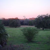 Lykes old fields at twilight, old Spring Hill, Florida (1-2007), Лив-Оак