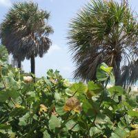 Miami Beach, Майами-Бич