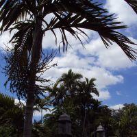 Palms and Lights, Майами-Спрингс