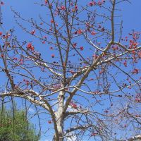 Beautiful Tree off Curtiss Parkway, Майами-Спрингс