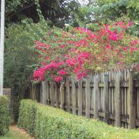 Flowered Buganvillia Fence, Майами-Спрингс