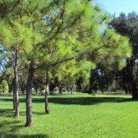 Pine trees & Grass at Ragan Park, Майами-Спрингс