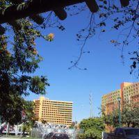 Skyline under the Pergola, Майами-Спрингс