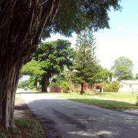 Beautiful trees in Miami Springs, Майами-Спрингс