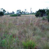 """Grass """"Pond"""", Малабар"""