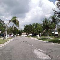 Brandon - FL - Looking NW, Манго
