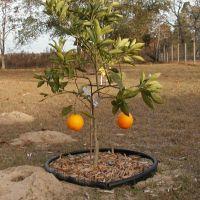 2 Oranges and a gopher mound, Мангониа-Парк