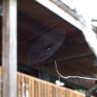 Fern Forest Nature Center Spider Web, Маргейт