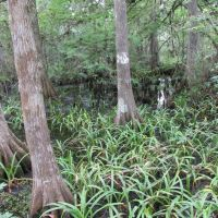 Fern Forest Nature Center , Coconut Creek FL USA, Маргейт
