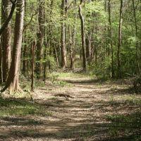 Main Trail to Chipola River, Марианна