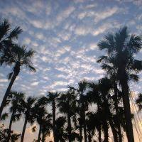 Florida Sunrise, Мельбурн
