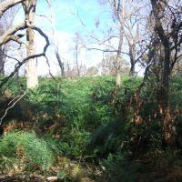 Melbourne Botanical Gardens, Мельбурн