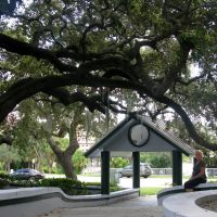 Live Oaks at Holmes Park, Downtown Melbourne, Мельбурн