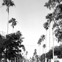Local landmark-palm lined McQuaid Street, Мельбурн