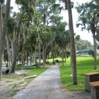 Oak trees, Миканопи