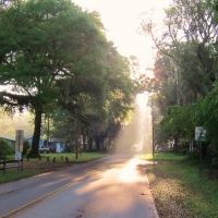 Micanopy in the morning, Миканопи
