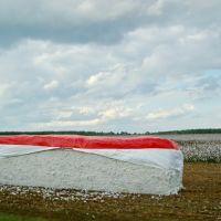 2010, cotton bale, Молино