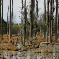 Swamp- Hartford, AL, Нома