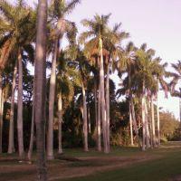 Greynolds Park Palm Road, Норт-Майами-Бич