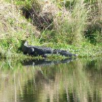 Gator!, Норт-Редингтон-Бич