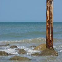 Cormorant on an old piling, Норт-Редингтон-Бич