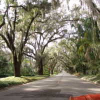 canopy road, 5th St SE, Ocala Fla (1-9-2011), Окала