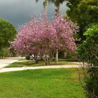 When lilacs last in the dooryard bloomd ... -W.Whitman, Олдсмар