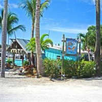 Casey Key Fish House, Оспри