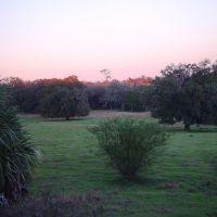 Lykes old fields at twilight, old Spring Hill, Florida (1-2007), Пайн-Хиллс
