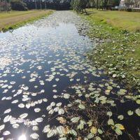 Canal, Палм-Ривер