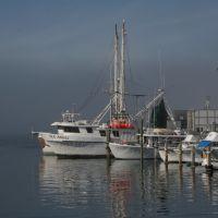 Fog on the Panama City Marina, Панама-Сити
