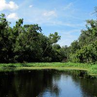 Black Creek Tributary View 1, Пенни-Фармс