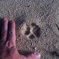 Bobcat Track, Порт-Шарлотт