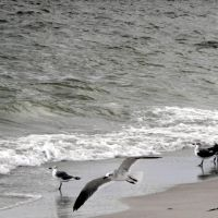 madeira beach, Редингтон-Бич
