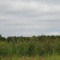 Cornfield, red-winged blackbird, Рускин