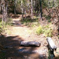Wekiwa State Park Trails: Marker 11, Саут-Апопка
