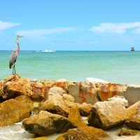 TREASURE ISLAND, FL, Саут-Пасадена