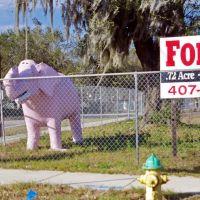 2012, Brandon, FL, Сеффнер