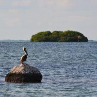 Pensive Pelican, Тавернир