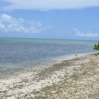 Beach Key West, Тавернир