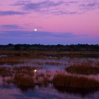 Moonrise, Lake Woodruff NWR, Тик